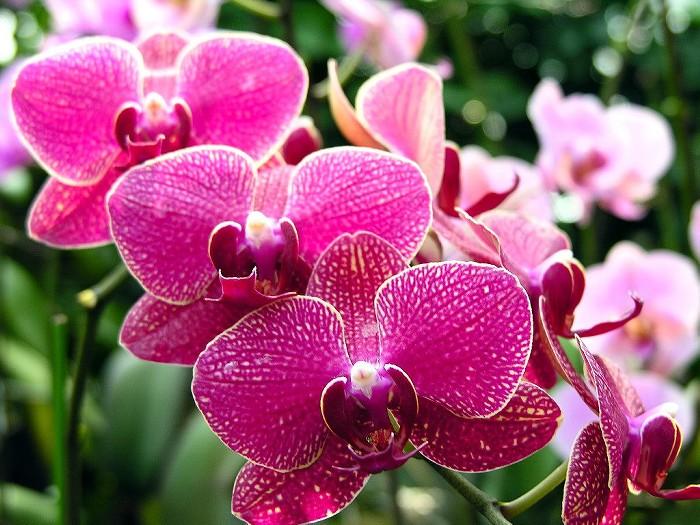 雅やかなお花—ラン