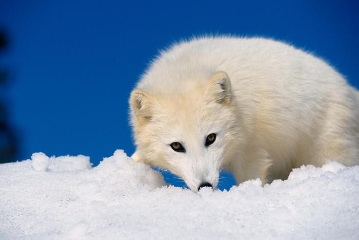 超大サイズ・動物写真