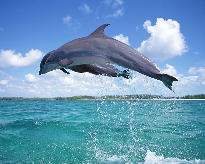 海の精霊:イルカ