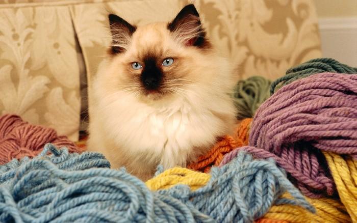 ペット子猫