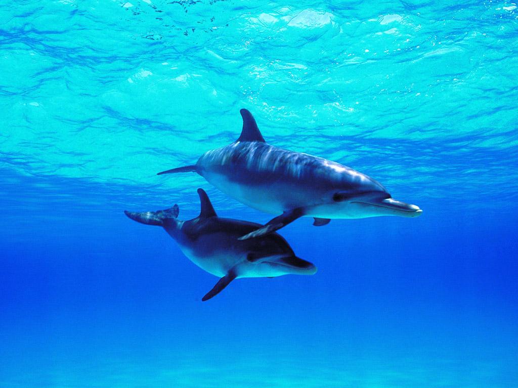動物壁紙 無料ダウンロード イルカの写真