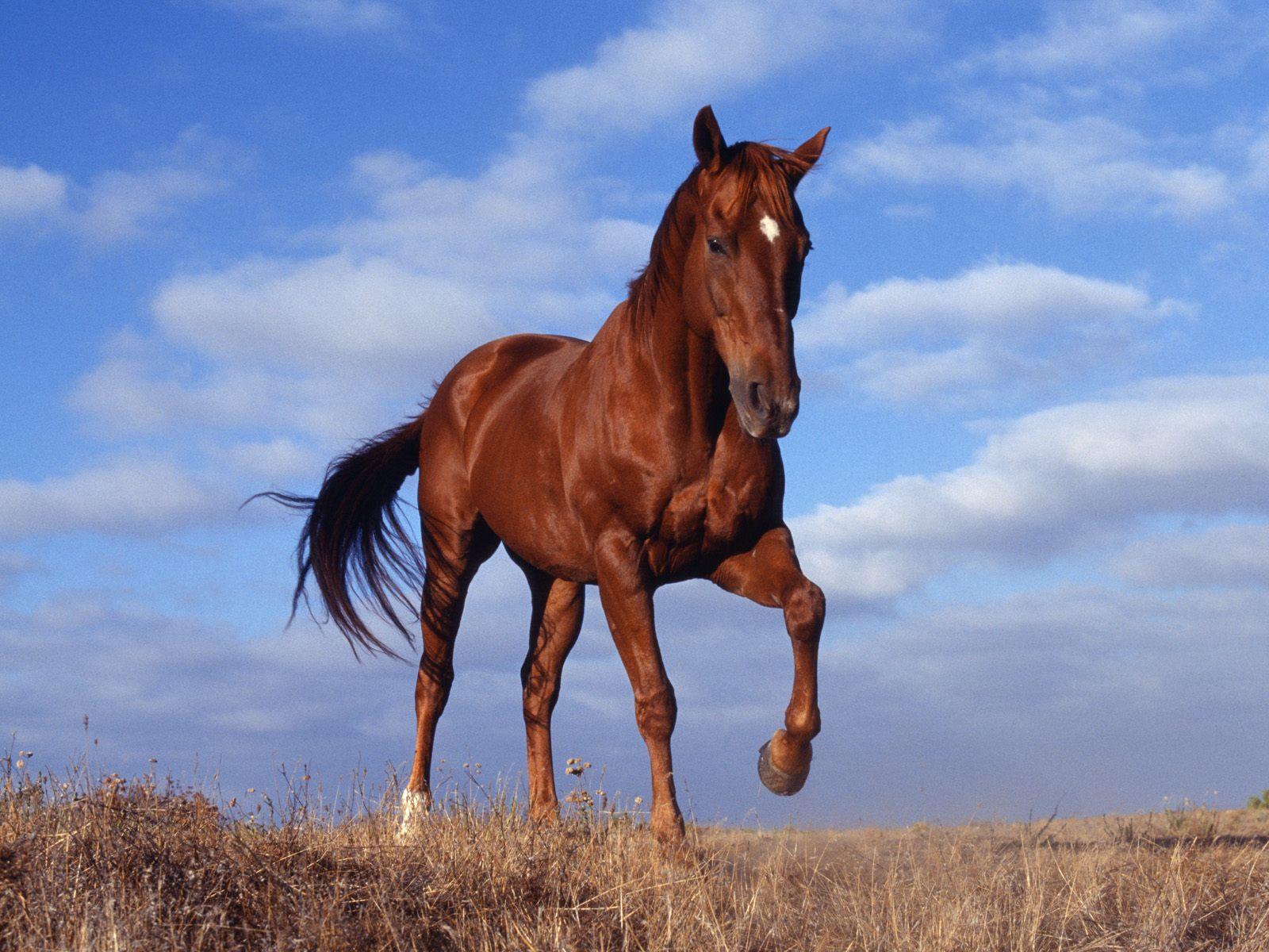 かっこいい馬の画像探してうまー - naver まとめ